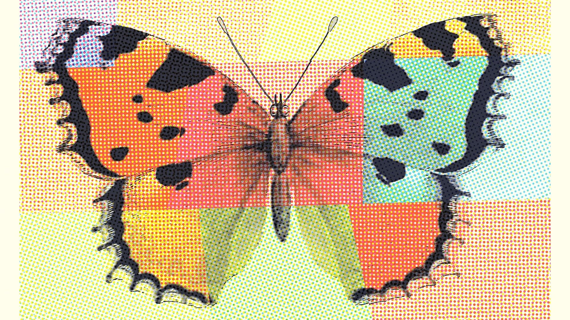 art image butterfly dots colored